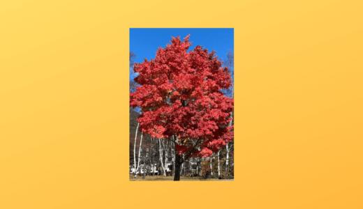 日光の紅葉を見てきました(2020年10月22‐24日)vol.1
