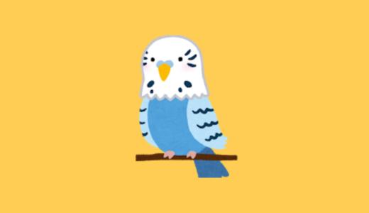 小鳥グッズを集めてみました